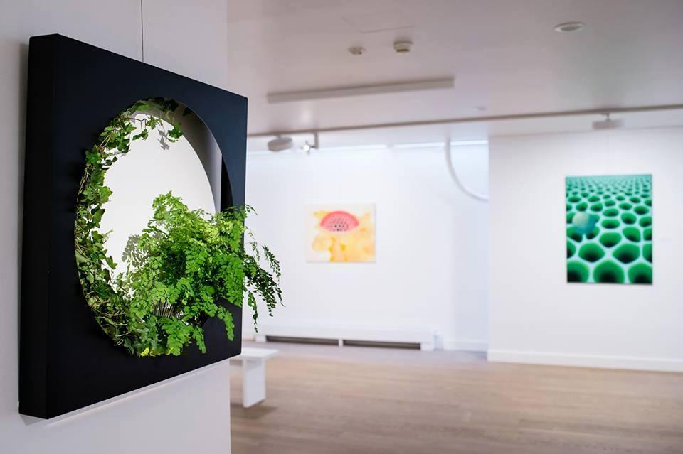 żywe obrazy z roślin
