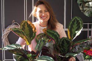 Kwiaty i rośliny antysmogowe - rośliny oczyszczające powietrze.