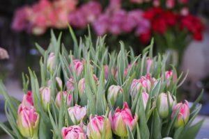 Kwiaty cięte do wazonu Szczecin
